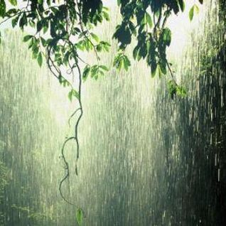 Relajación con Sonidos Naturales de Lluvia
