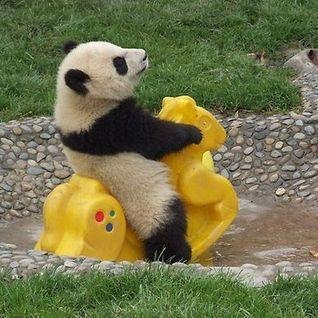 20140827 Lovesick Panda Party