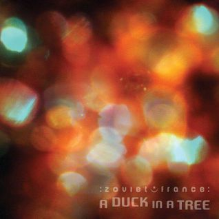 A Duck in a Tree 2014-11-29 | About the Bushbeat