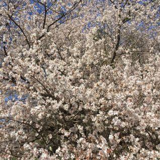 Month #48 - Flower