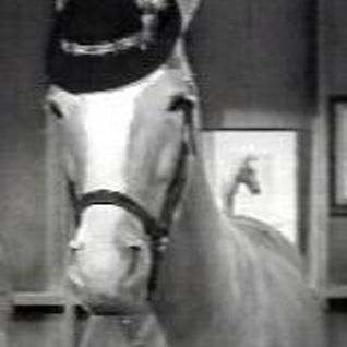 My Schwindel, My Pony & Me