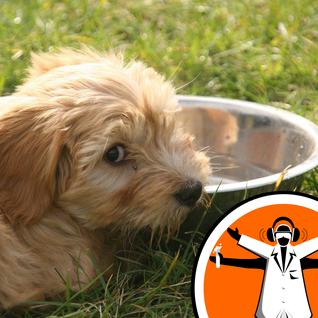Why Do Dogs Slurp So Sloppily?