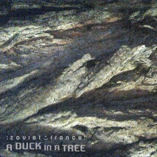 A Duck in a Tree 2015-02-28 | Between the Outskirts
