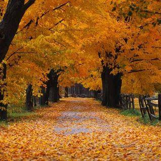 Autumn mix up
