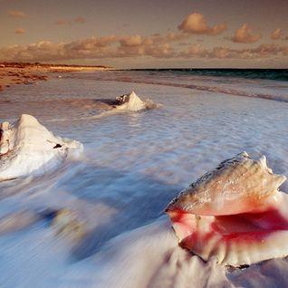 Sea Shells (Part 2)