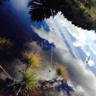 Life In Liquid Skies