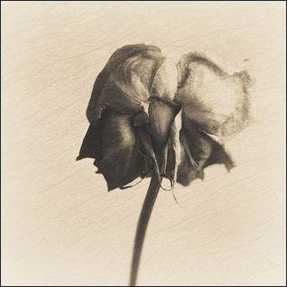 Nirvana - In Bloom (deadSlim Bootleg)