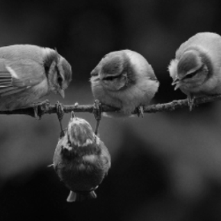 4 little birds