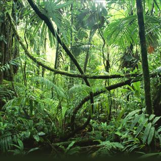 A mix of some jungle I made