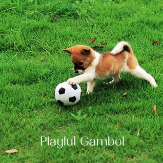 057 - Playful Gambol