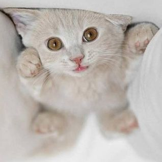 Die Kitten Tape 8