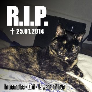 R.I.P. _ ✝25.01.2014 _ in memories _ Kitti