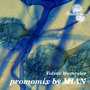 Volvox Mucorales promomix by MIAN