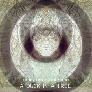 A Duck in a Tree 2014-03-01 | The Ambiguity of Red