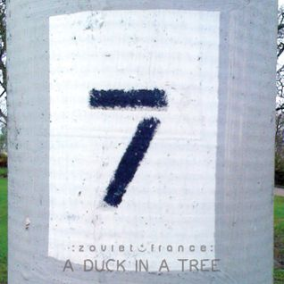 A Duck in a Tree 2013-12-21 | Searching for the Seventh Whistler