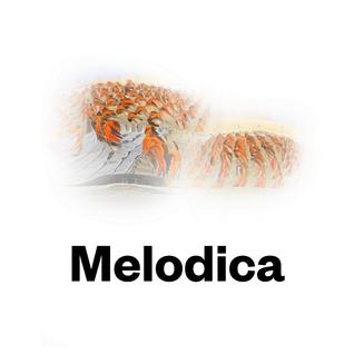 Melodica 31 October 2016 (in Tokyo)