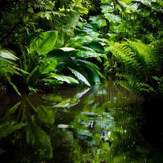 UTMP#5 - Warm Jungle