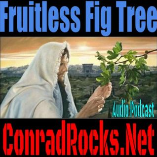 Fruitless Fig Tree