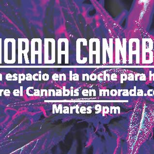 Morada Cannabica 2016-03-08