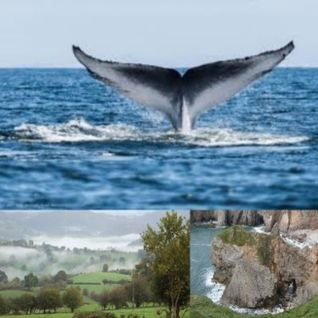166 WHALES AND WALES