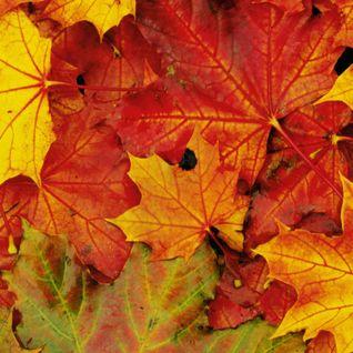 Impressioni d'autunno
