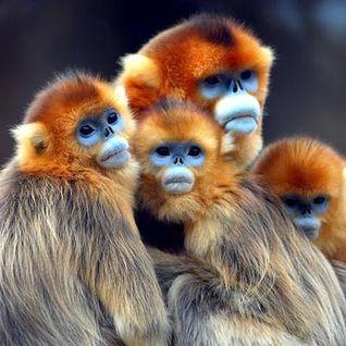 Golden Monkey Island