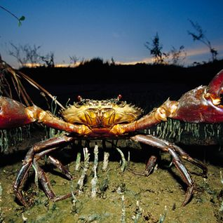Jure-assic Crab Boil