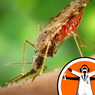 Zika declared public health emergency