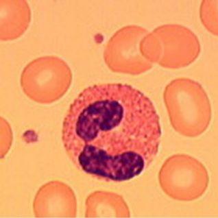 Eosinophiles