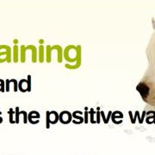 Training dogs and their owners the positive way