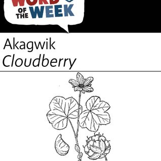Season 19, Lesson 6, Cloudberry