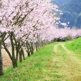 Schlager - Spread Spring