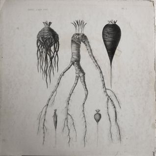Radio By Request: Root Vegetables