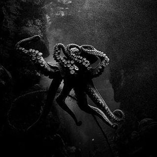 Octopus Podcast