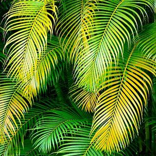 Junglefeevah 2003