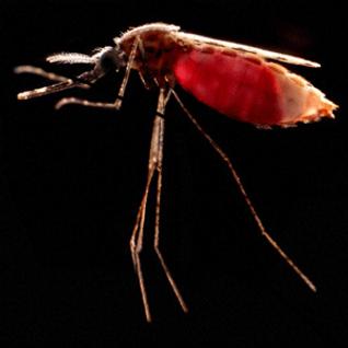Mosquito Beats #5 - Pt.2 Muchas Matthias #HipHop #Bogle #RnB #Reggaeton (57min)