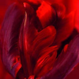 """Sven presents """"La Tulipe"""" Mixsession"""