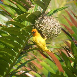 Zanzibar Bird Mix