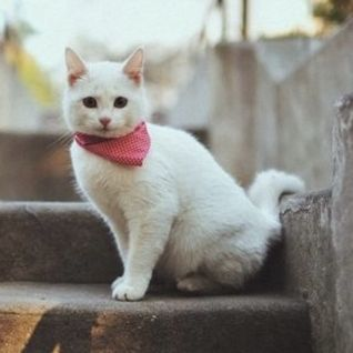 Die Kitten Tape 16