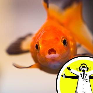 Do Fish Fart?