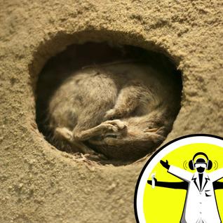 The Hidden World of Hibernation