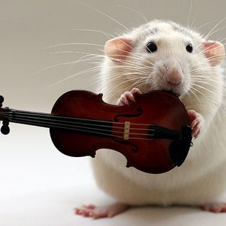 Musical Rodent