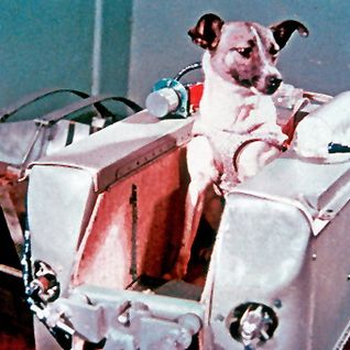 """In memory of Laika († 1957) - First living creature in space"""