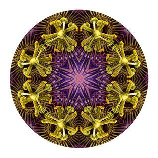 Dj Dre@mz - Passion Flower - Face Yourelf Series