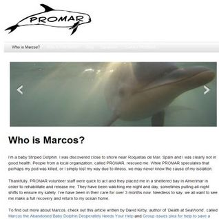 PROMAR - helping dolphins, whales and sea turtles in Spain