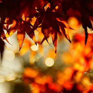 autumn is magic tech mix