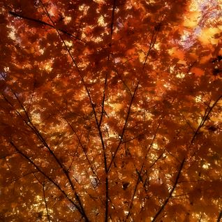 Draped in Autumn's Golden Mantle - ST 2015.11.03