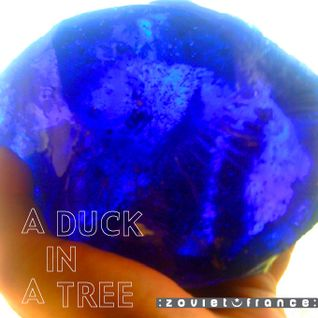 A Duck in a Tree 2012-08-25 | Astronomonical Cosmonetics