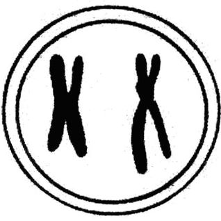 Mixtape Cromossomos XX