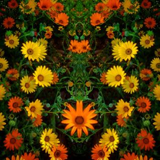 FLOWER  ( 145 )